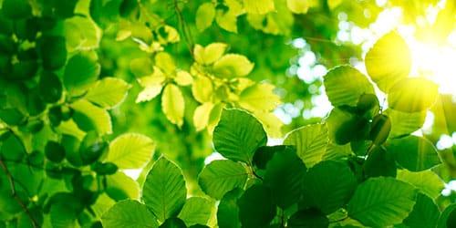 к чему снятся зеленые листья