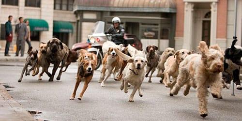 сонник много собак