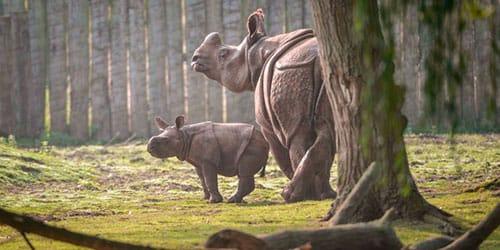 носорог в зоопарке во сне