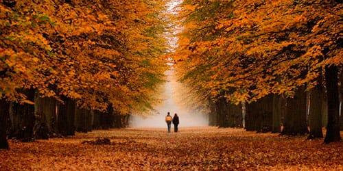 сонник осень