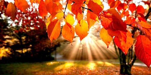 золотая осень во сне