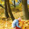 к чему снятся осенние листья
