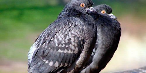 Сонник птичий помет к чему снится птичий помет во сне
