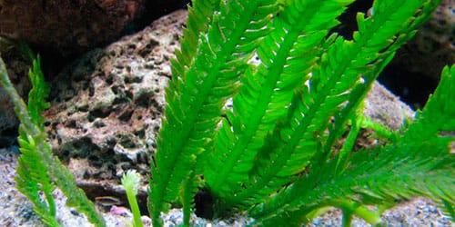 к чему снятся водоросли