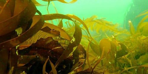 водоросли в грязной воде во сне