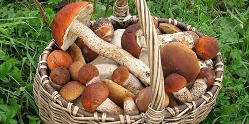 корзина с грибами во сне