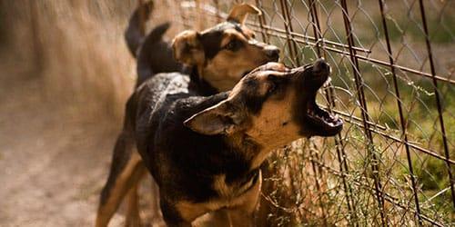 сонник лает собака