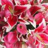 лилии во сне