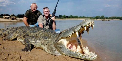 сонник убить крокодила