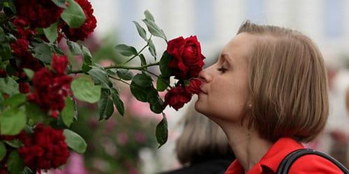 сонник запах цветов