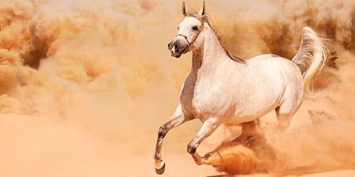 догонять лошадь во сне