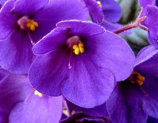 К чему снится фиолетовый цвет?