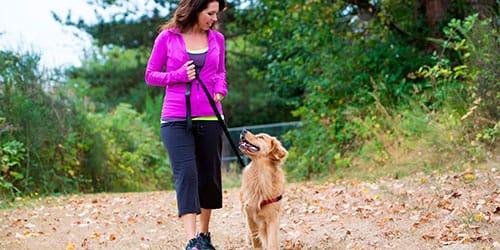 сонник гулять с собакой