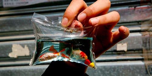 к чему снится пакет с живой рыбой