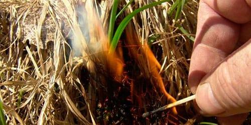 к чему снится поджигать траву