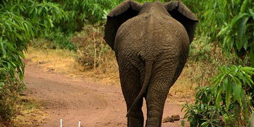 сонник превращение в слона