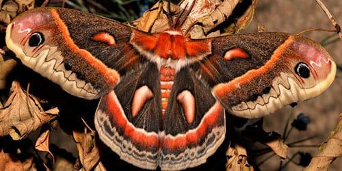 превращение гусеницы в бабочку во сне