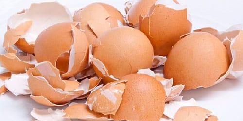 к чему снится скорлупа от яиц