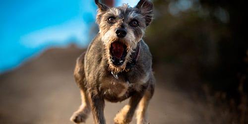 сонник собака гонится