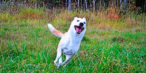 к чему снится белая собака гонится