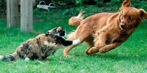 к чему снится собаки дерутся с кошками
