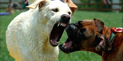 собаки дерутся во сне