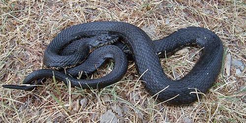 сонник убитая змея