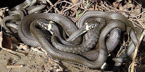 убитая змея во сне