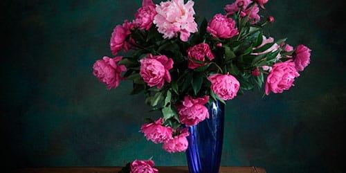 сонник цветы в вазе