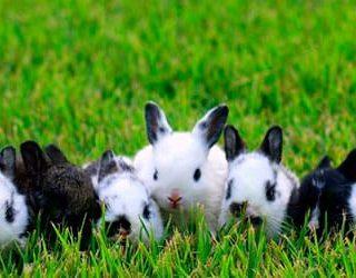 Маленькие кролики