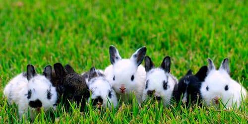 к чему снится много маленьких кроликов
