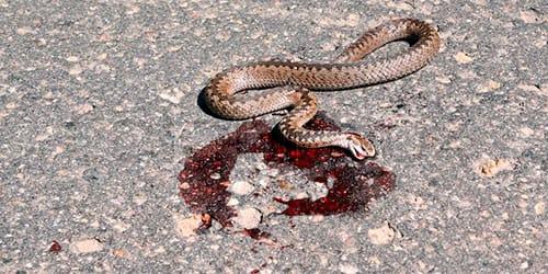 сонник мертвая змея