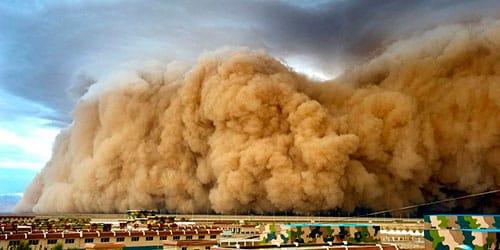 сонник песчаная буря
