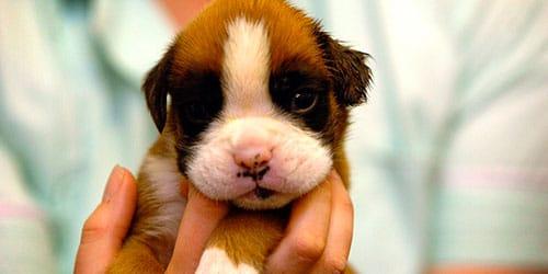 сонник щенок на руках