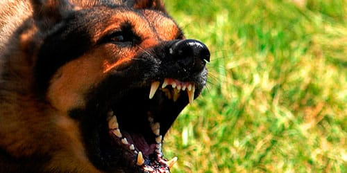сонник собака кидается