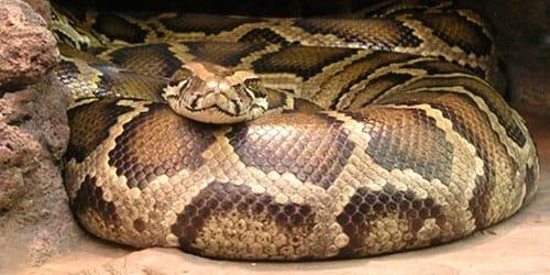 к чему снится змея женщине замужней которая нападает на знакомую