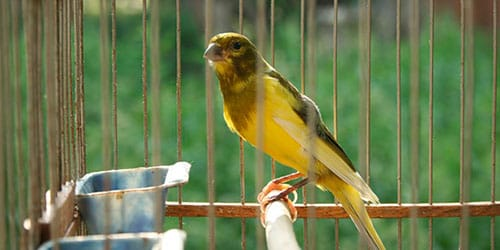 птица в клетке