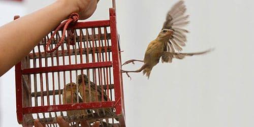 выпускать птиц из клетки
