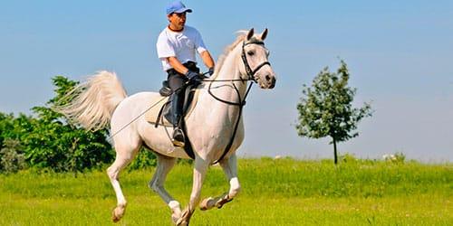 скакать на белой лошади во сне