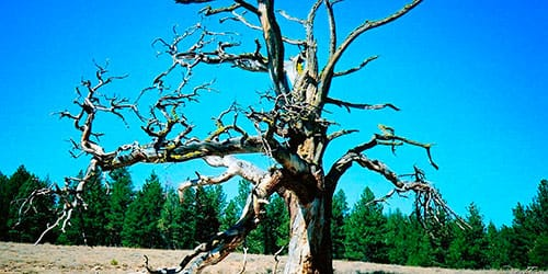 сухое дерево зацвело во сне