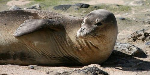 тюлень во сне