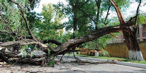 повалилось дерево во сне