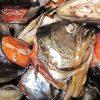 кушать тухлую рыбу