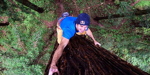 упасть с дерева вниз