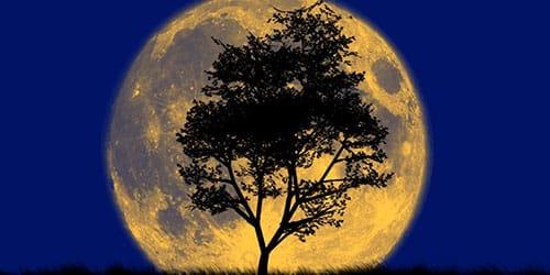 большая луна во сне