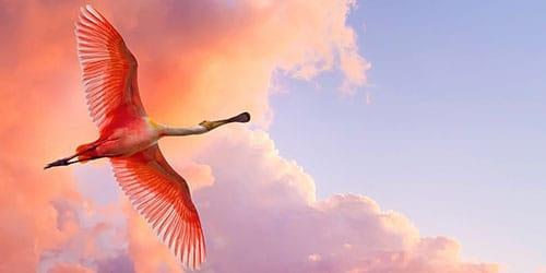 большая птица в облаках
