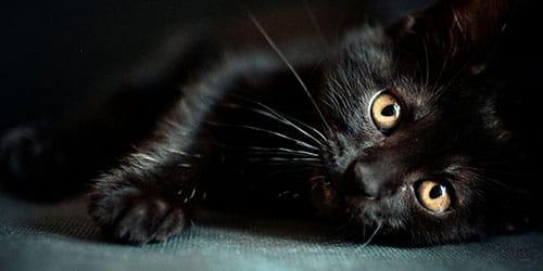 котенок черного цвета