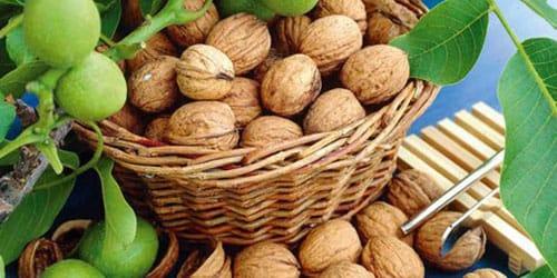 к чему снятся грецкие орехи