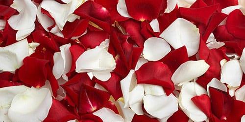 осыпающиеся лепестки роз