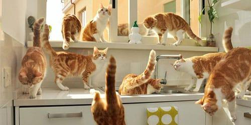 много кошек в доме